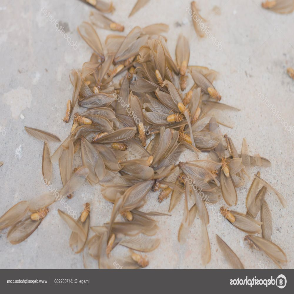 stock photo many brown winged termite alates