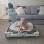 Cama Perro Palet Agradable40 Diy Pallet Dog Bed Ideas Don T Know Which I Love More